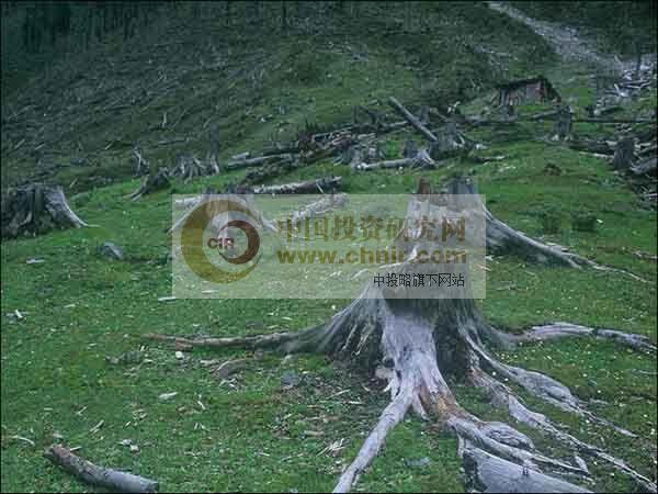 人工林采集